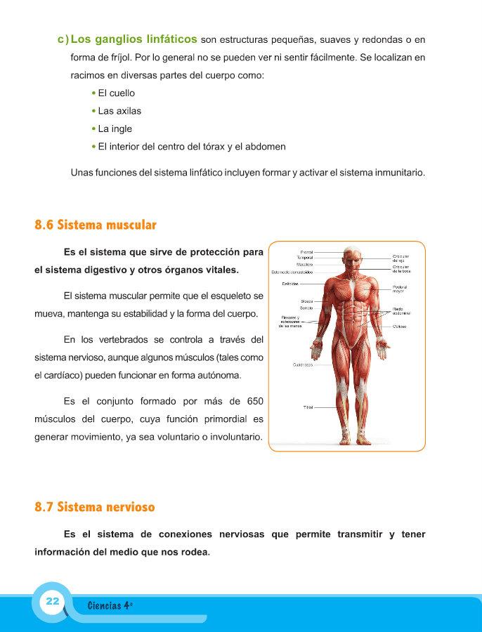 Hermosa Diagrama De Músculos De La Ingle Bosquejo - Anatomía de Las ...
